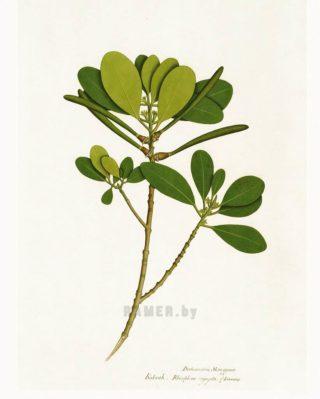 Ботанический гербарий