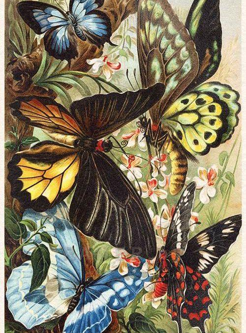 Бабочки, пчелы, стрекозы