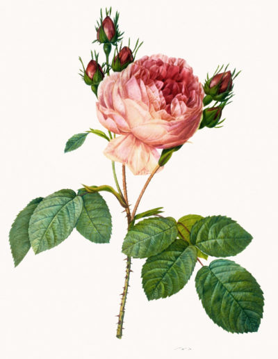 Репродукция картина - роза_4