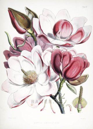 Экзотическая флора