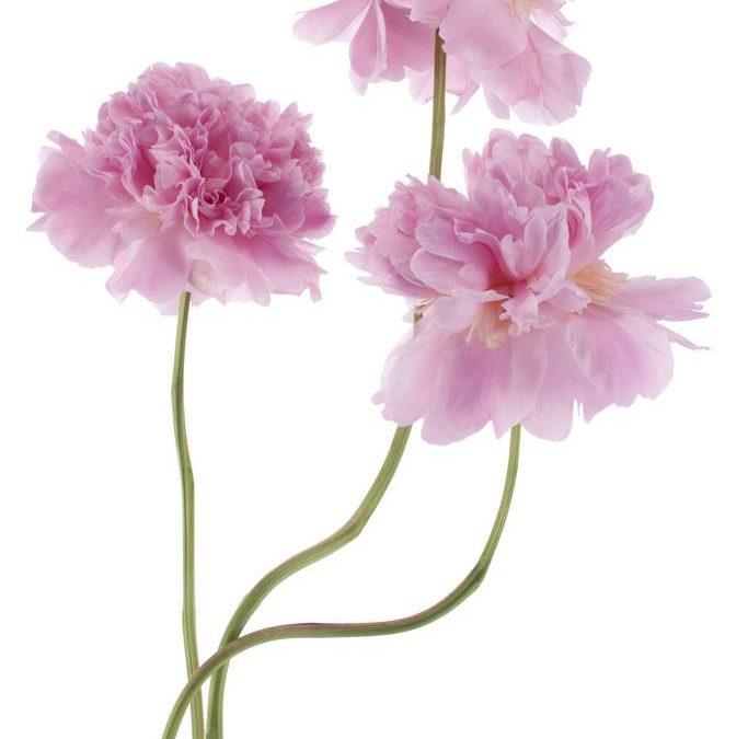 Минимализм (флора в высоком ключе)